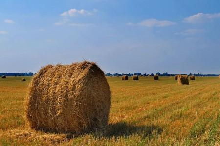 Подписано соглашение ольготном кредитовании аграриев поставке 5%