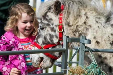 Ростовский зоопарк повыходным набирает волонтеров